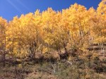 ColoradoAspens2014