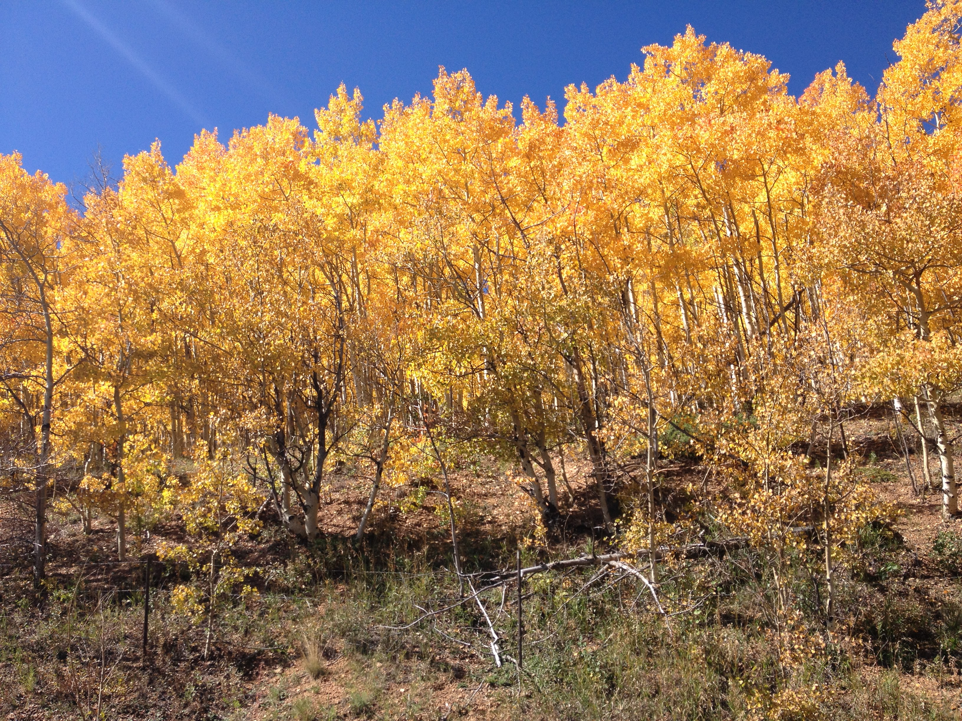coloradoaspens