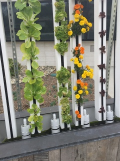 hydroponicgarden